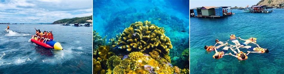 lặn ngắm san hô tại bãi hòn khô quy nhơn